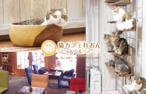猫カフェれおん横浜店でXEM決済
