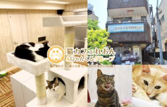 猫カフェにゃんくる鎌倉店でXEM決済
