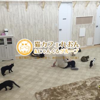 猫カフェにゃんくる蒲田店でXEM決済