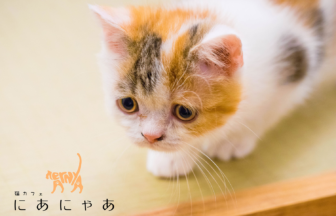 大阪梅田の猫カフェ猫カフェにあにゃあでネム払い・ネム決済